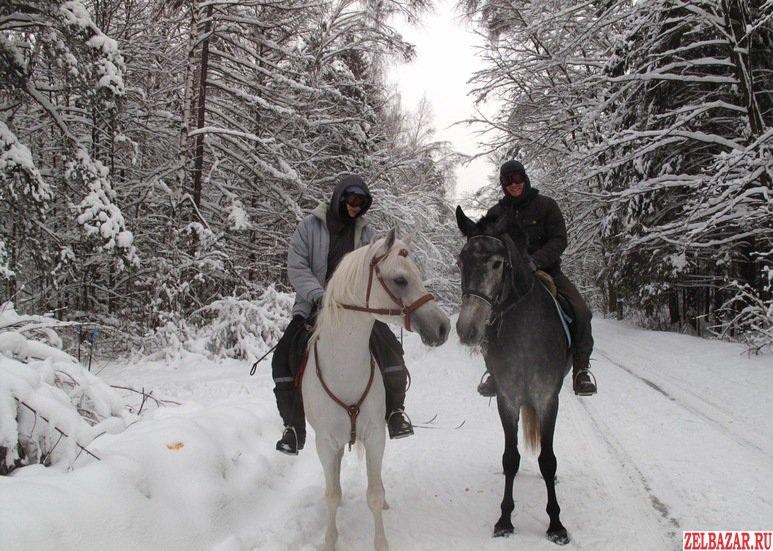 Конные прогулки и обучение верховой езде