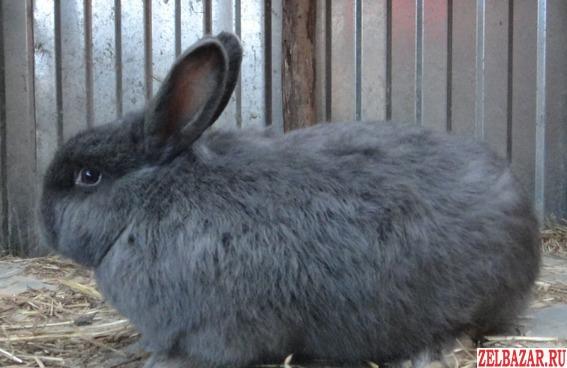 Крольчата и взрослые самцы и самки