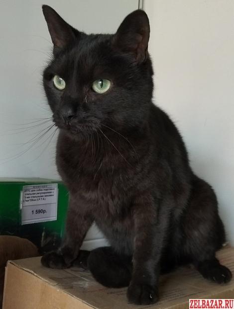 Найден Черный Кот