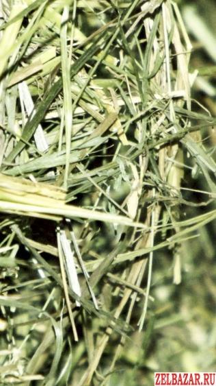Сено луговое разнотравье в тюках