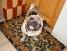 Домашняя гостиница для собак «Мускат»
