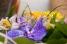 Фото видео съёмка свадеб и др.  мероприятий
