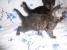 Помогите котятам обрести свой дом! Пожалуйста!