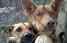 Щенки и собаки приюта г Химки,  Очень срочно нужен дом и хозяин