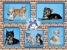 Йоркширский терьер,  Китайская хохлатая собачка  - милые малыши